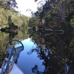 Stillness of the Noosa everglades